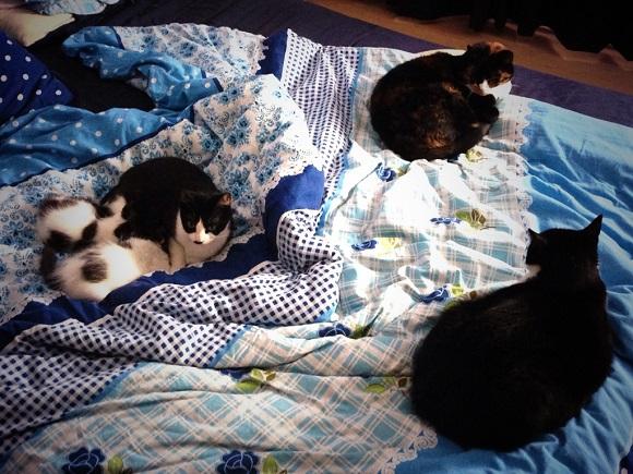 Veel katten samen