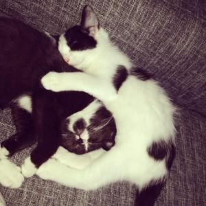Zusje knuffelen