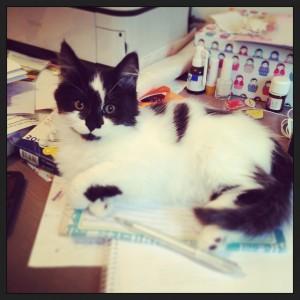 Huiswerk maken met de kitten
