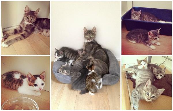 Kittens2014