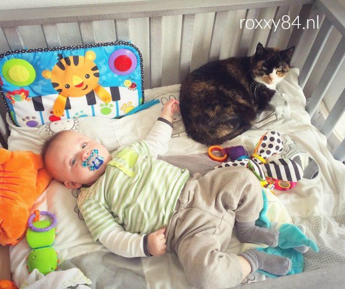 katten en baby's