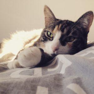 Kat slaapt op bed
