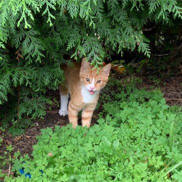 Kittens: Voor het eerst naar buiten